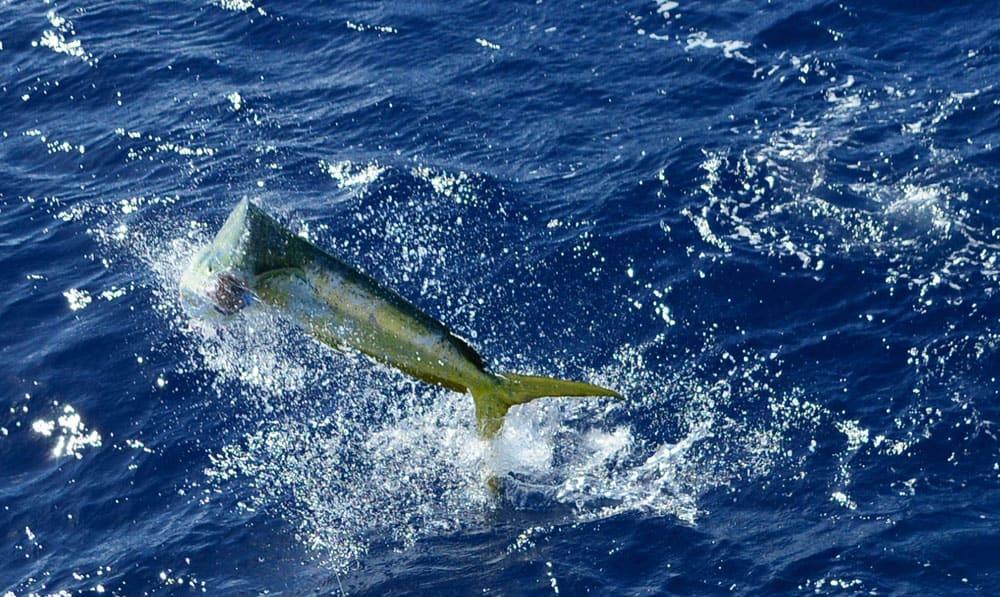 Rocks, Reefs and Wrecks Affect Deep Sea Fishing